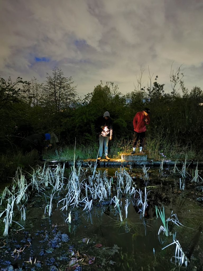 Conservation traineeship spotting amphibians with a torch