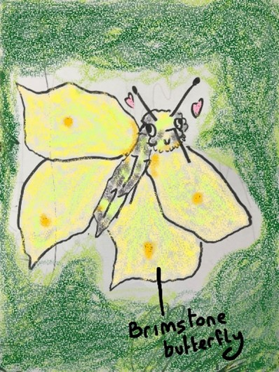 Hand drawn picture of Brimstone butterfly