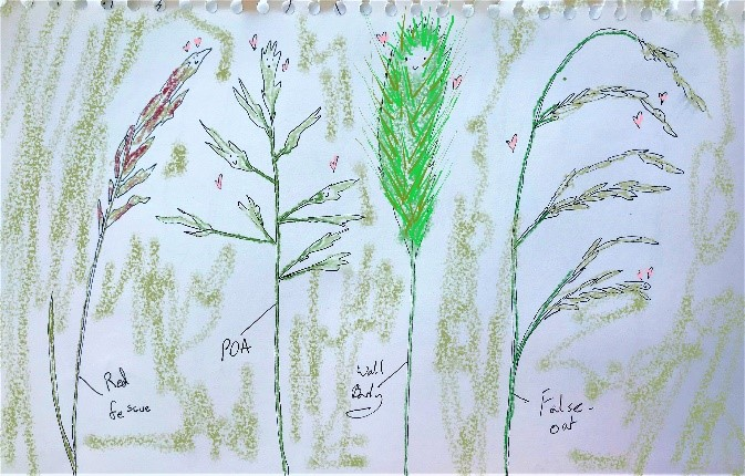 Drawing of London grass
